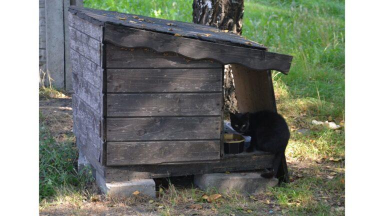 Program opieki nad zwierzętami bezdomnymi